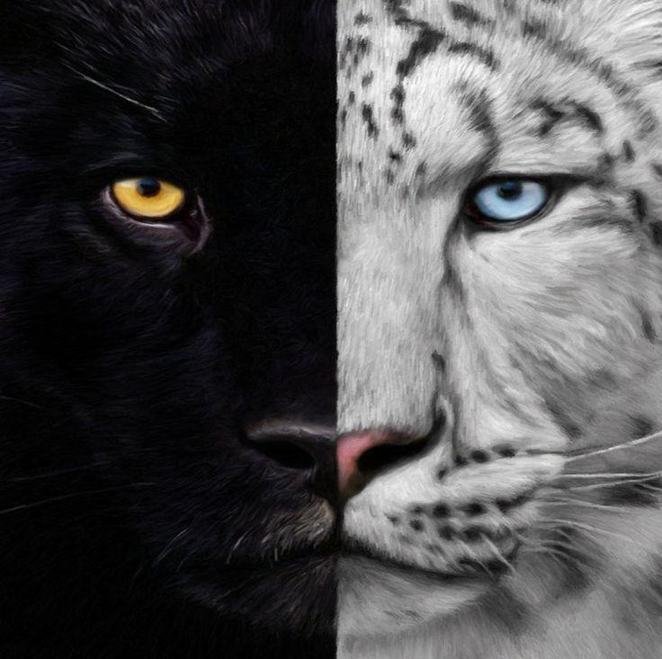 White/Black Panther | Animals | Animals, Cats, Panther