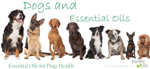 Essential Oils For Dogs Health