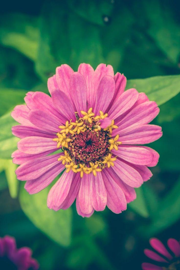 Free stock photo of romantic, summer, garden, petals