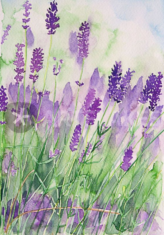 Lovely watercolour!! I love lavender!