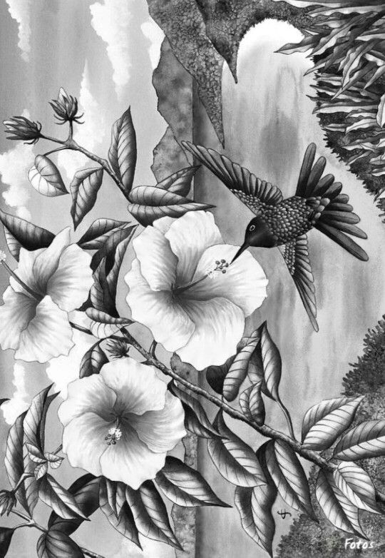 274 best grayscale coloring images on Pinterest