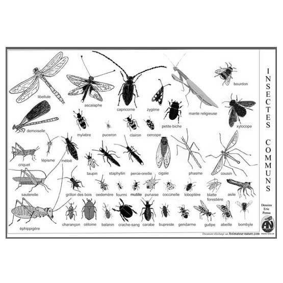 les 54 meilleures images propos de insectes sur pinterest madagascar animaux et ph m re. Black Bedroom Furniture Sets. Home Design Ideas