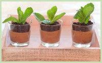 Hoe leuk zijn deze miniplantjes die eigenlijk bestaan uit Chocolademouse, oreo en munt. Zelf chocolademousse maken is bovendien helemaal niet moeilijk. Je steelt gegarandeerd de show bij jong en oud!!
