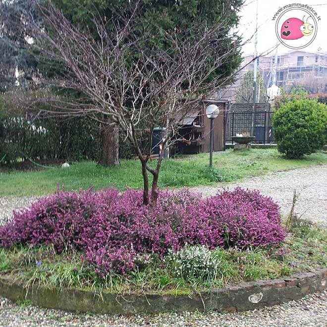 La Primavera: una occasione per trovare la felicità   Mamma Felice