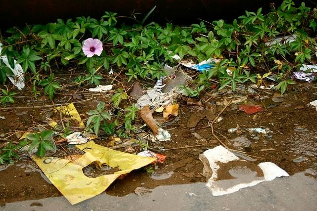 O Sonho de todo lixo é ser uma flor um dia.