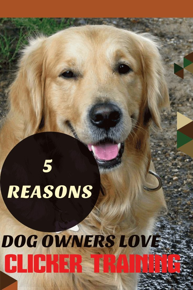 Why Use Clicker Training For Your Dog Here Are 5 Amazing Benefits
