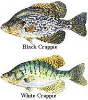 Crappie Fishing - Fishing lures - Things To Use