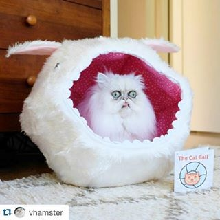 This didn't just happen once, it happened twice. And it got reposted.Also, proof that aliens exist. ⚪️ #Repost @vhamster with @repostapp. ・・・ What actually happened to the Killer Rabbit of Caerbannog.  Cat bed by @thecatball. #Chipotle #thecatball #catball #catspotting #catsofinstagram #persiancats #nofilter