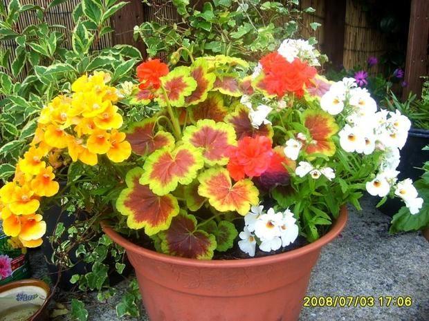kwiatki w donicy