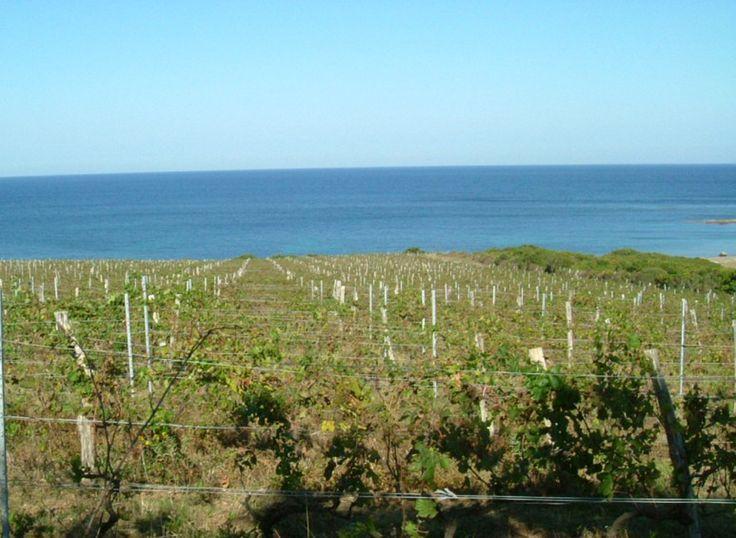 Les Gîtes de France Corse à la foire du vin de Luri, A fiera di u Vinu! Samedi 9 et Dimanche 10 juillet, rendez-vous sur notre stand : - Pour découvrir les formules d'hébergements  - Pour participer au notre tirage au sort et tenter de gagner un bon cadeau de 200€ à valoir sur un séjour en gîte ou en chambre d'hôtes à choisir dans une sélection. voici la liste des chambres d'hôtes dans cette région : http://ww7.fr/Chambres Découvrez les gîtes et city break libres du 9 au 16 juillet.