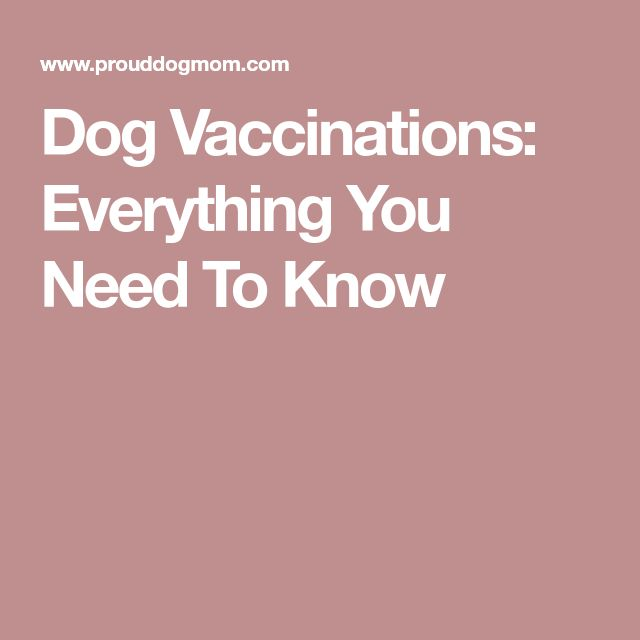 Dog Vaccinations: Everything You Need To Know