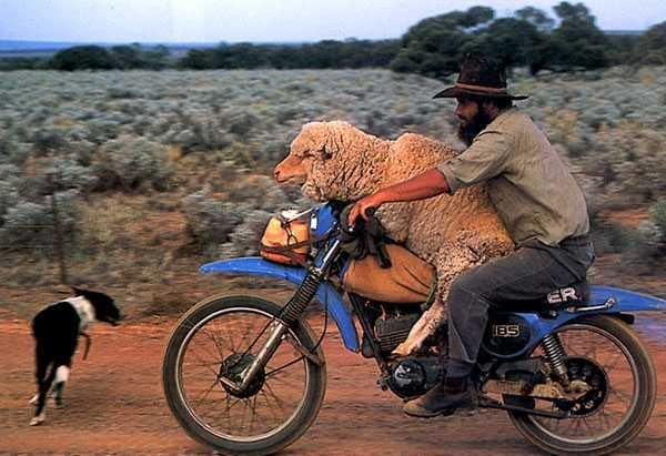 An Australian Stockman doing his rounds. **