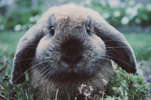 beautiful pet rabbit... our!