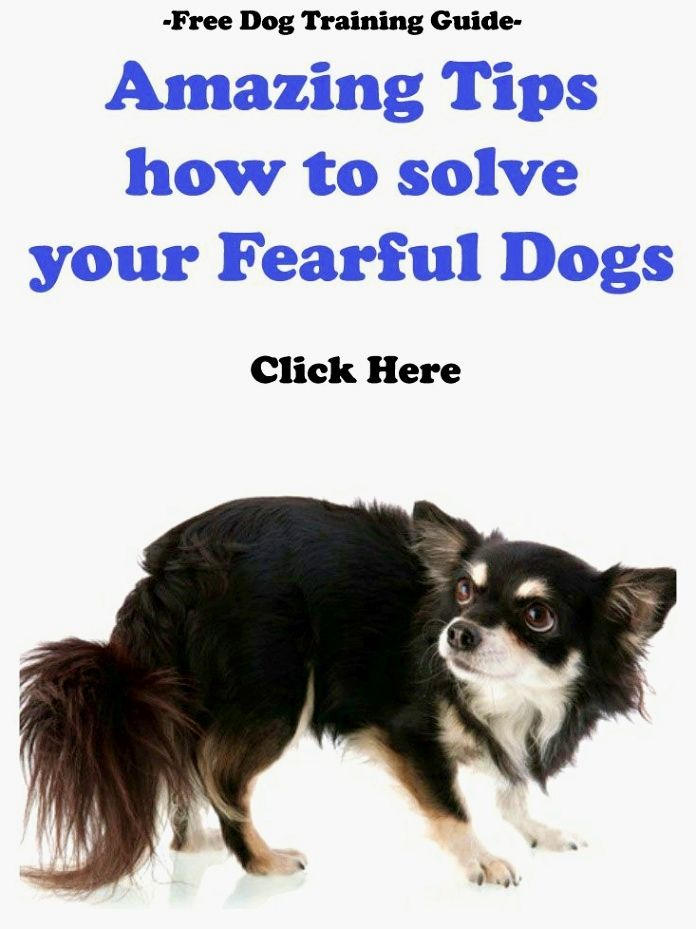 Most Important Dog Training Tip Become The Pack Leader Dog Training