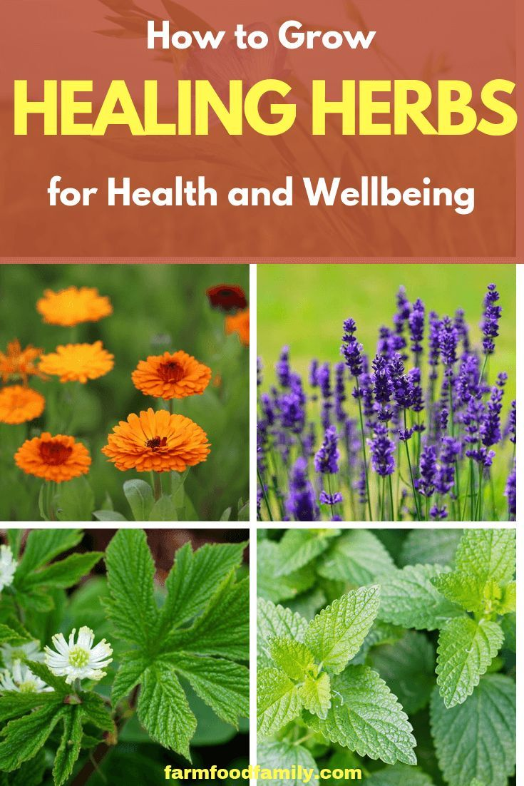 Healing Herbs Designing And Planting A Medicinal Herb Garden
