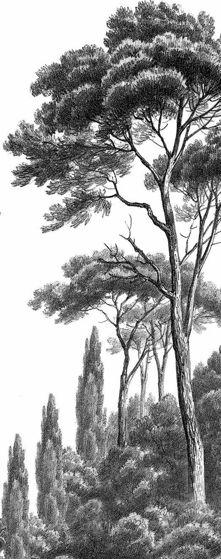 Papier peint panoramique Pins et Cyprès noir et blanc Ananbô
