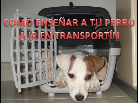 transportin para perros - YouTube