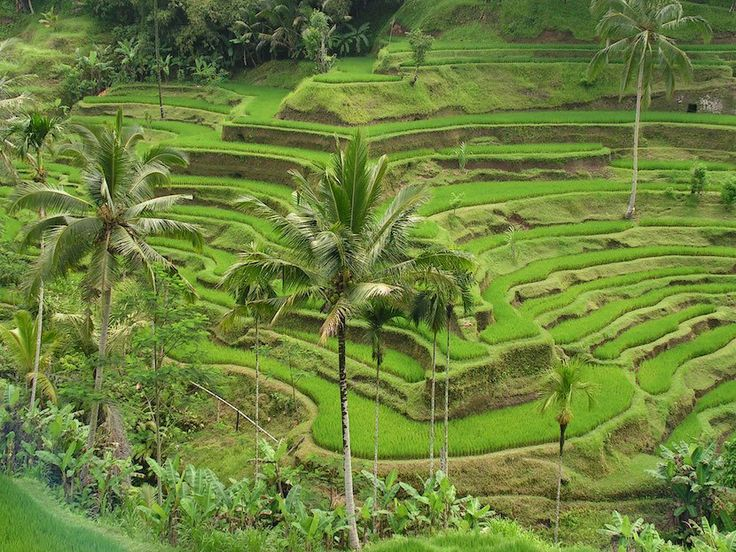 Subak : Balinese Traditional Irrigation system - 01islands.org