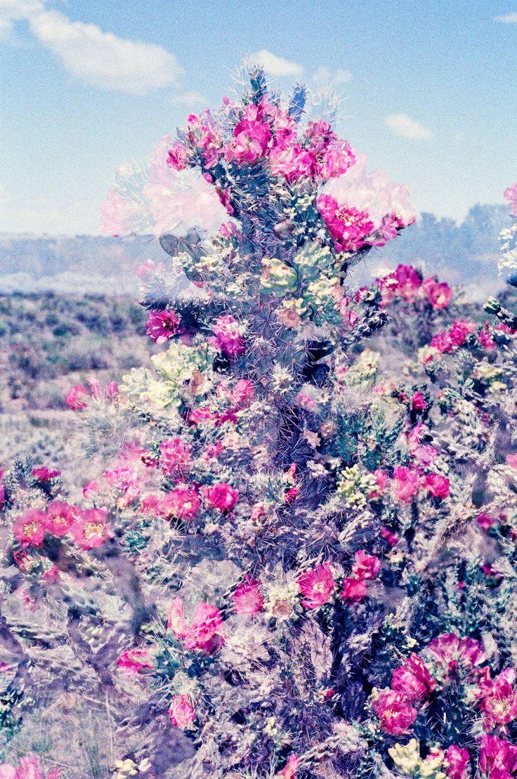 'Desert Flowers' | Courtesy of Ruvan Wijesooriya