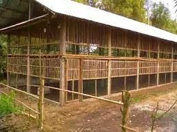 Manajemen kandang Ayam Broiler | www.agrinak.com