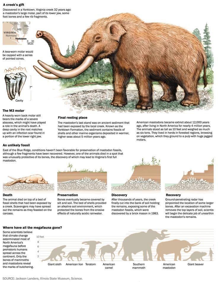 El mastodonte | Autor: Patterson Clark | Medio: The Washington Post, del 21 de julio.