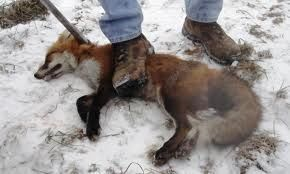 Urge facebook to ban PRO-HUNTING/PRO-FUR groups/pages/posts Sport Hunting and the fur industry are two of the major violations against animal rights.if hunting was a sport the animals would have guns to. HATE HUNTERS