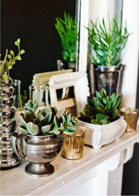 I have a huge collection of antique old jewelry boxes and no use for them. Why not plant my favorite plants inside?