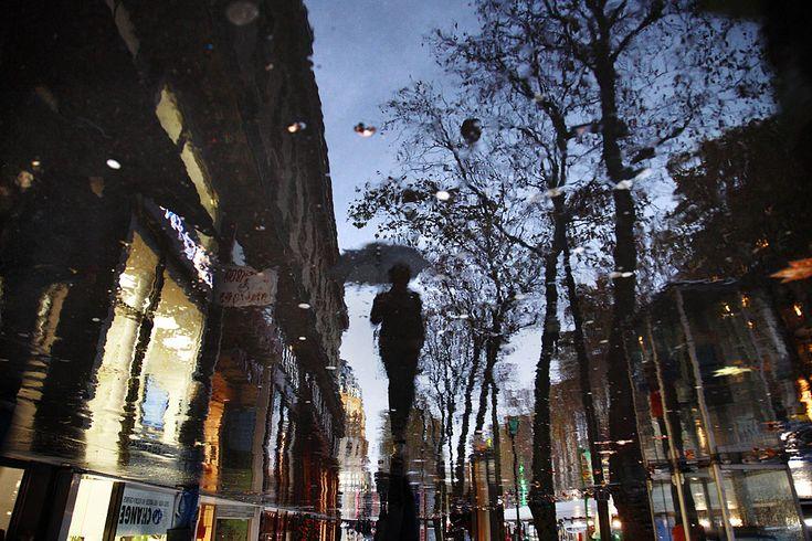 Chien et loup (Paris): 60x90 cm ed.12 / 80x120 cm ed.12