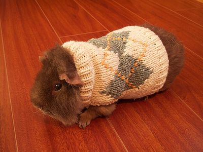 Argyle Guinea Pig - These 30 Animals In Sweaters Aren't Gonna Let Cold Weather Ruin Their Fun