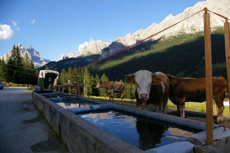 Italia - Dolomiti Bellunesi - Malga Misurina