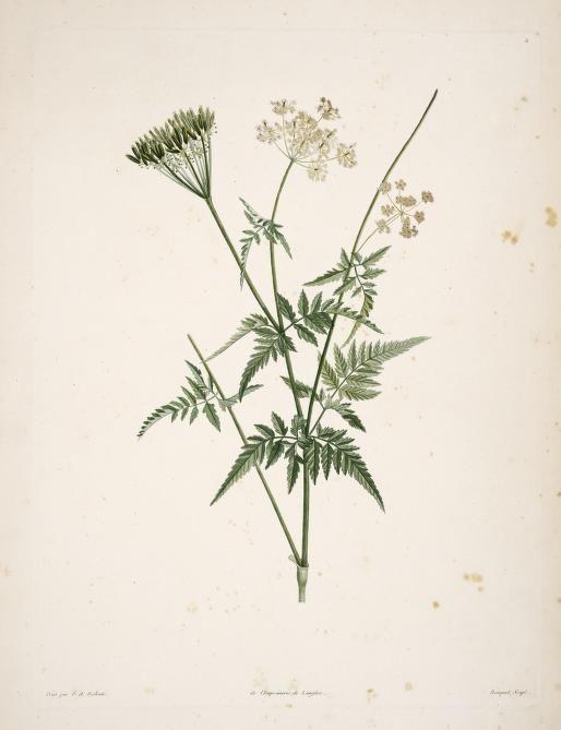 Fleurs de saison - Page 5 D847751ba9c4e086908c5f3c91231d00--antique-illustration-botanical-illustration