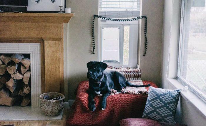 Τα 21 πιο ευφάνταστα σπίτια για σκύλους μέσα στο σπίτι!  #design #diakosmisi #DIY #minimal #pet #αρχιτεκτονική #διακόσμηση #έμπνευση #ιδέες #ιδεεςδιακοσμησης #κατοικιδια #κουζινα #μοντέρνο #σαλόνι #σκυλιαγιασπιτι #σκυλοσπιτο #σπιτακιγιασκυλο #σπιτι #σπιτιγιασκυλο #σπίτισκυλου #σπιτισκυλουξυλινο #σπιτιασκυλου #σπιτιασκυλων