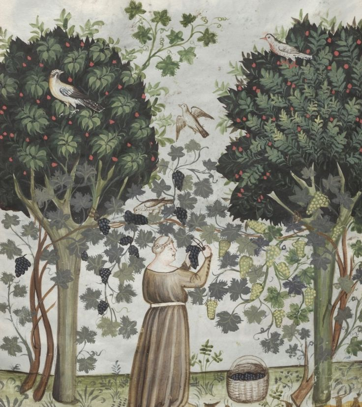 Grape harvesting: between trees is a woman who cuts the grapes - Uve | Österreichische Nationalbibliothek - Austrian National Library | Public Domain
