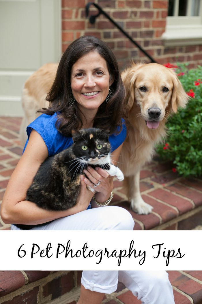 6 Pet photography tips for taking photos of dogs and cats.