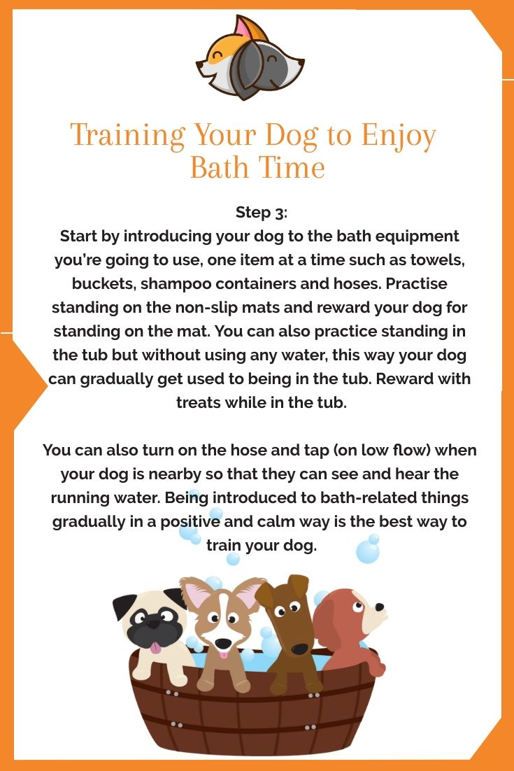 The Ultimate Guide To Grooming And Bathing Your Dog Your Dog
