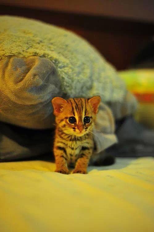 Cute Little Cat For Wallpaper 190 Best Mace I Zivotinjice Images On Pinterest Adorable