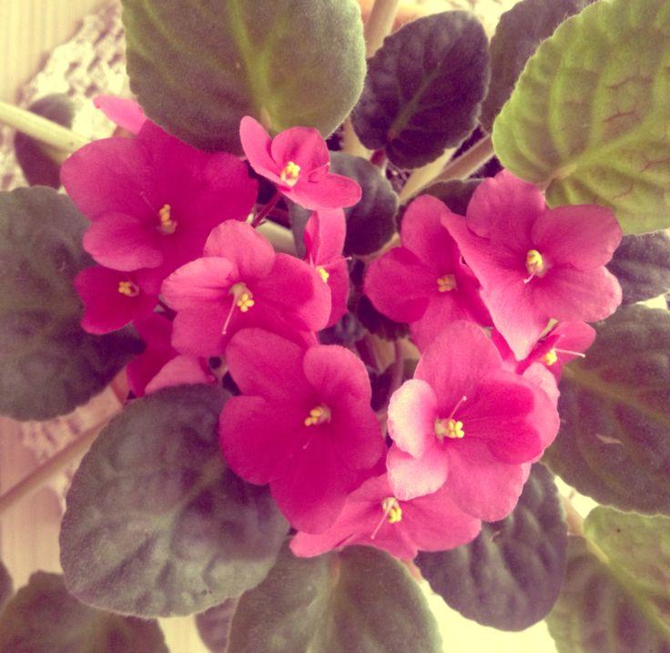 Iubita nostra floricica, simte cât este de iubita...  ❤️ #flower #love #pink #fuchsia #inlovewithflowers #brasov #accessoriesforstars #sweetmoments