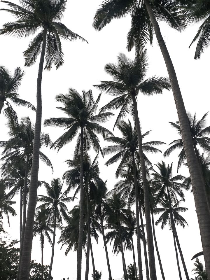 Black And White Palm Trees Black And White Picture Wall White Wallpaper Black And White Wallpaper Iphone