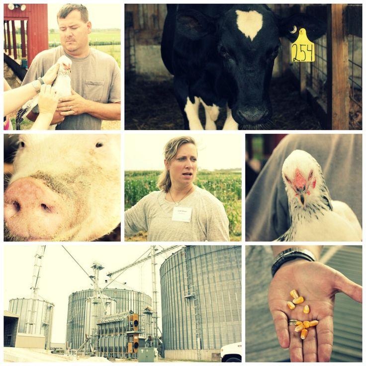 Pork Schnitzel Recipe and Ohio Pork Farm Visit