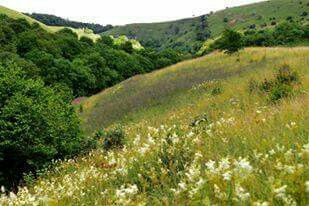 Bellamys bank  Millers dale    This place was were the great botanist started his love of nature - Nick Rowley