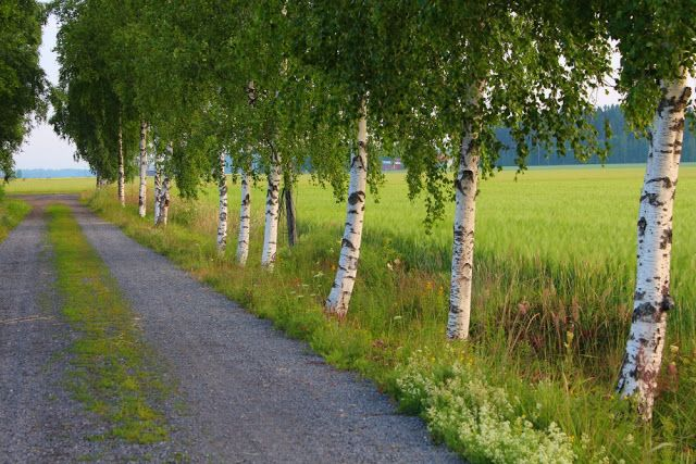 Finland, countryside