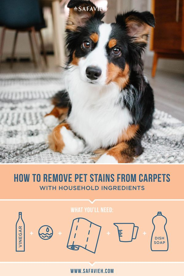 How To Clean Area Rugs Pets Pet Stains Remove Pet Stains