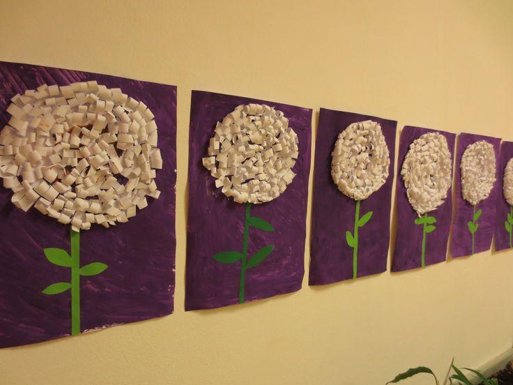 krizanteme, chrysanthemums