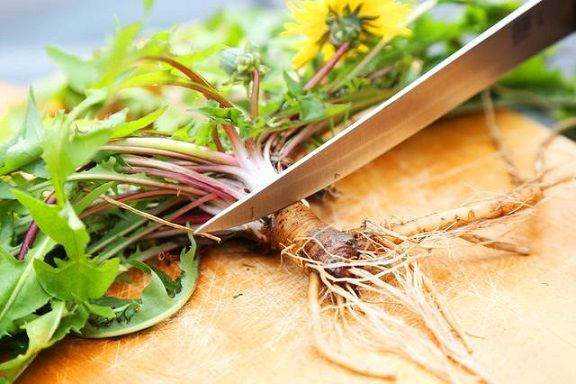 dandelion-root-more-effective-than-chemotherapy - http://www.healthyfoodhouse.com/dandelion-root-more-effective-than-chemotherapy/