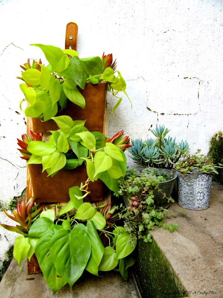 Do you have old DVD cases lying around gathering dust? Don't throw them away before you see this unique idea to recycle them into a vertical garden.
