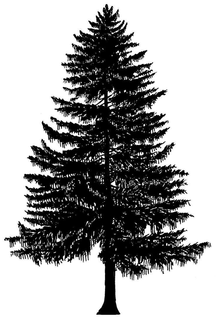 washington evergreen tree line drawing - Google Search ...