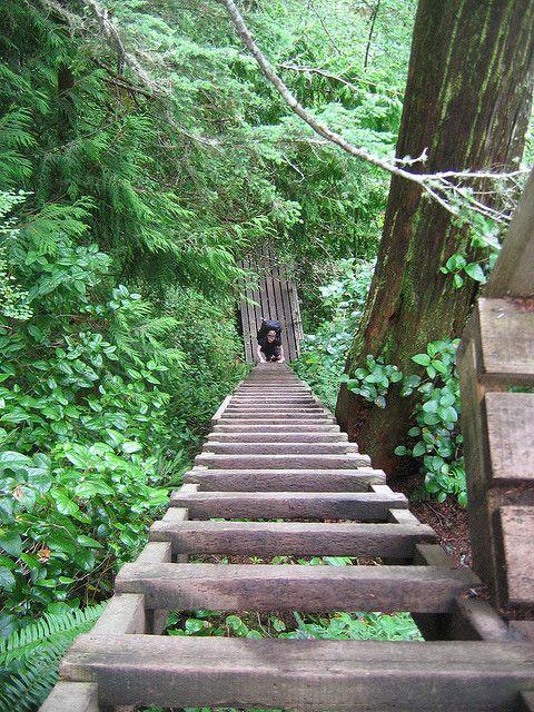 West Coast Trail | West Coast Trail - LadderBottom