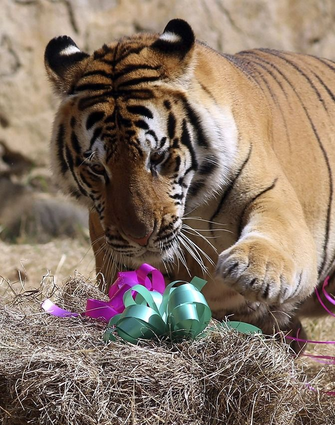 Animals around the world were not forgotten this Christmas. Dec 2015