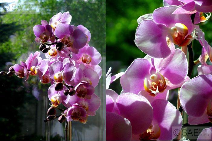 Kombinacja - orchidea.