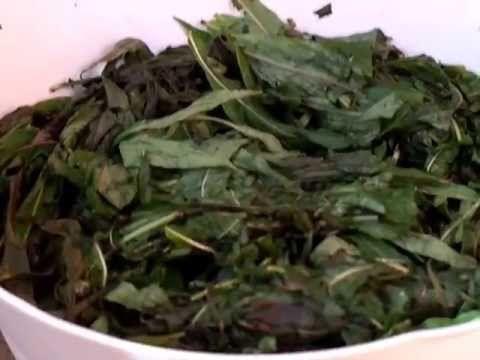 Заготовка иван-чая. Скручивание и ферментирование. Часть 2 - YouTube